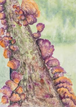 Lichens on Sycamore